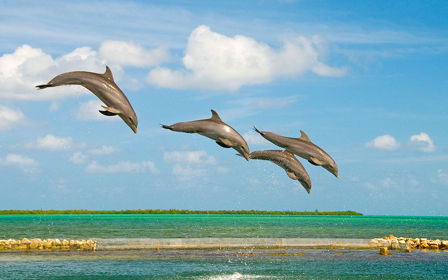 Grand Cayman Marriott